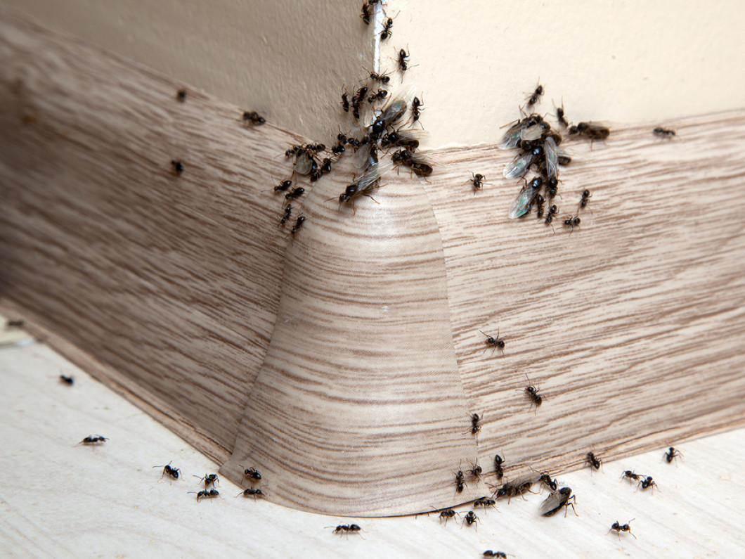 What's the Best Exterminator Service in Fairfield, Newport & Waterville or Augusta, ME?